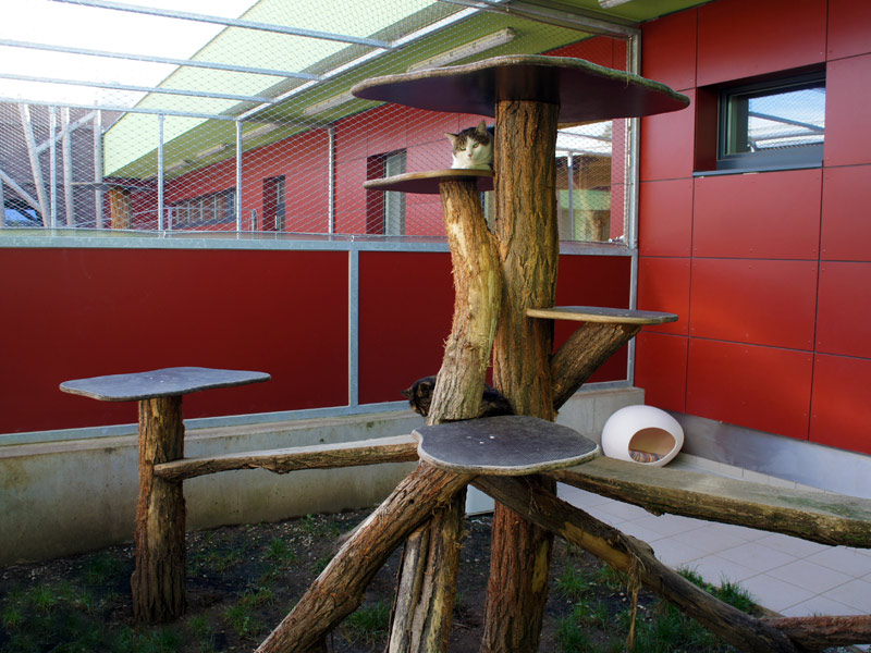"Fig 1: Outdoor area adjacent to accommodation for healthy cats (""Tierschutzkompetenzzentrum Klagenfurt"", Austria; kindly provided by Dr. Marina Zuzzi-Krebitz and MMag. Alexander Zuzzi)"
