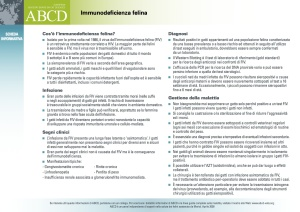 IT_FIV_Immunodeficienza_felina