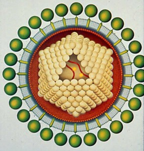 Cartoon of a Gammaretrovirus - note the ikosahedral capsid. ©Scientific American